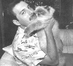 Фредди вместе с любимой кошкой